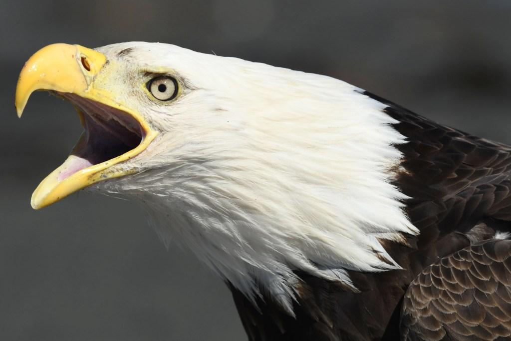Homer Alaska Eagle Photo Workshop