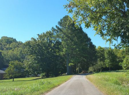 Childhood home hidden in trees - left; pines we planted - center, and a limb of the walnut tree on right.