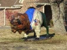 bison-9