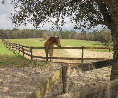 The farm is spacious with many fenced-in pastures.
