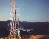 Perseid over Olympic National Park, August 1990, Photo by Allan J Jones