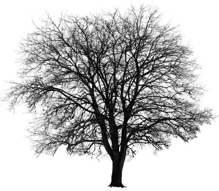Winter Tree, Photo by Allan J Jones