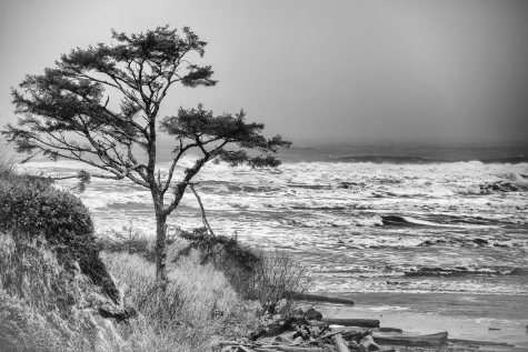 Kalaloch Storm, Olympic National Park, 15Feb2017, Photo by Allan J Jones