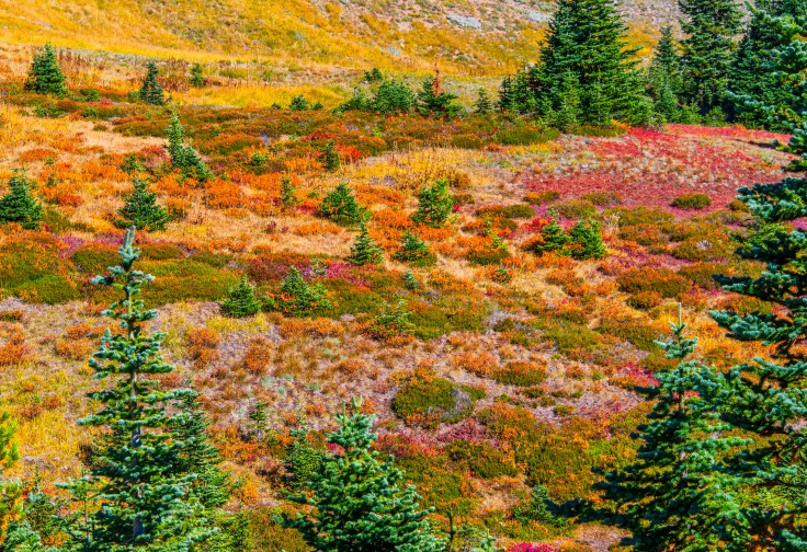 Hurricane Ridge Meadow Fall Colors Allan J Jones Photography