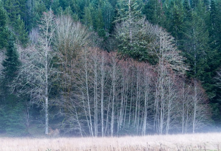 Alders, Maples and Mist by Allan J Jones Photography