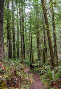 Quilcene River Trail by Allan J Jones Photography