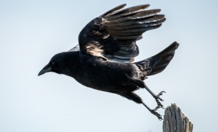 Taking Flight by Allan J Jones Photography