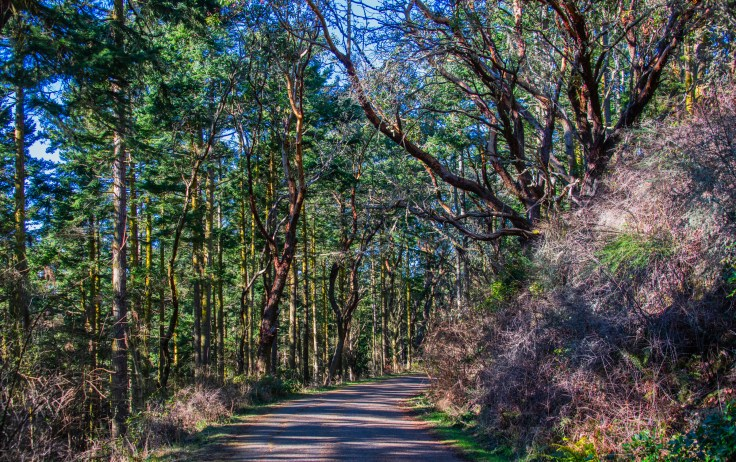 Madrone Walk by Allan J Jones Photography
