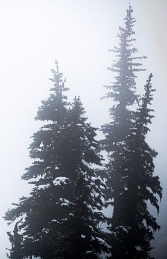 Hurricane Ridge in Fog