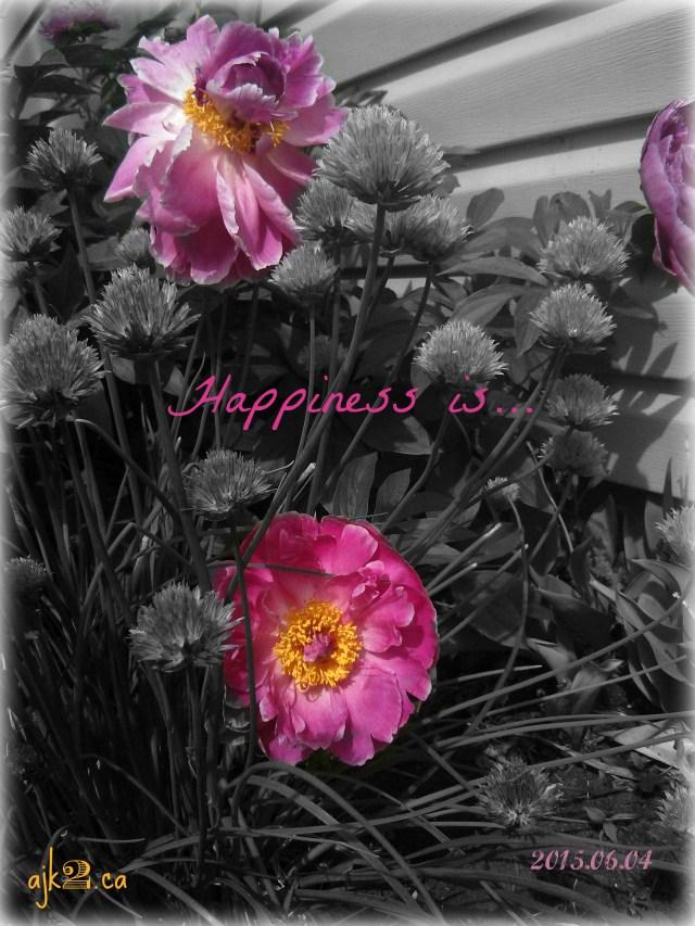 2015-06-04 happiness 1.2