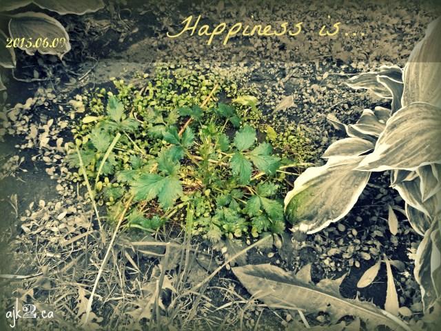 2015-06-09 happiness