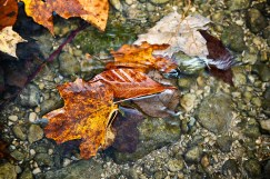 'Autumn Washed Away,' Diane Hammond/ via Flickr