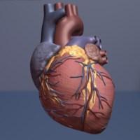 beating heart still
