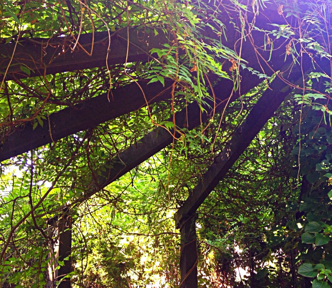 Photo of vines sprawling over the arbor.