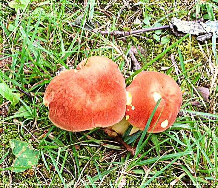 Photo of wild mushrooms