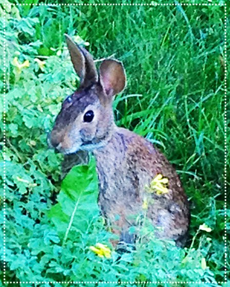 photo of rabbit in garden