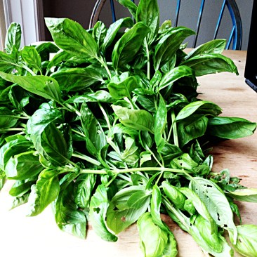 basil leaves covering the table