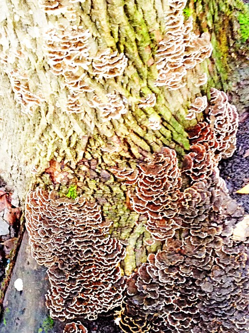 Fungus and lichen patterns on tree trunk