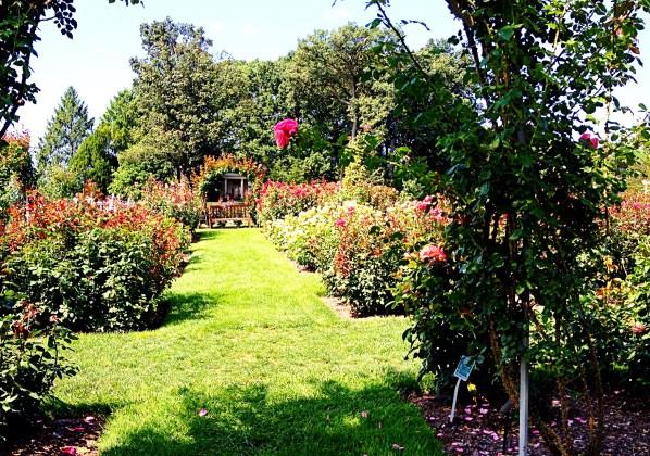 Garden viewed through rose arch.