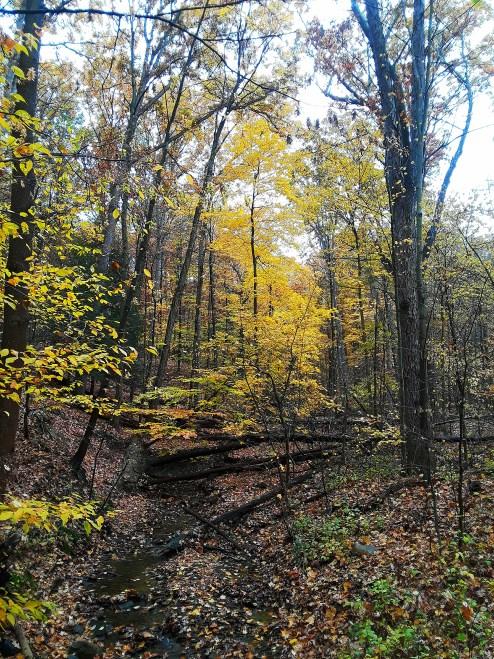Golden colors in autumn woods