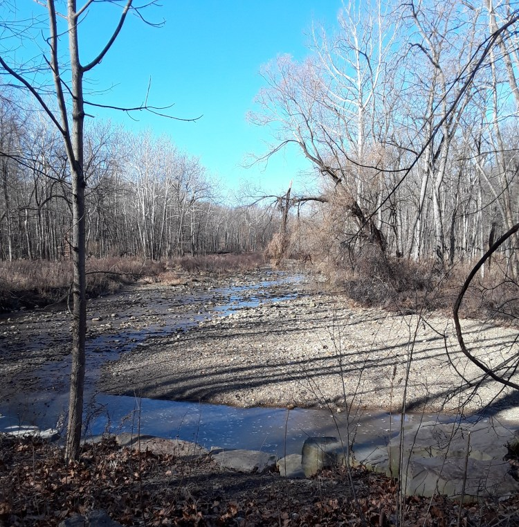 stream with bare trees along the banks