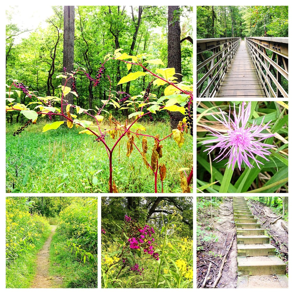 Bridges, stairs, and paths lead through wildflower dotted fields.