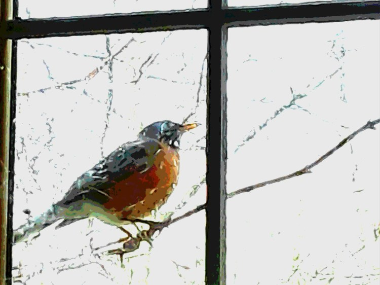 A robin perches on a vine stem outside a rain covered window
