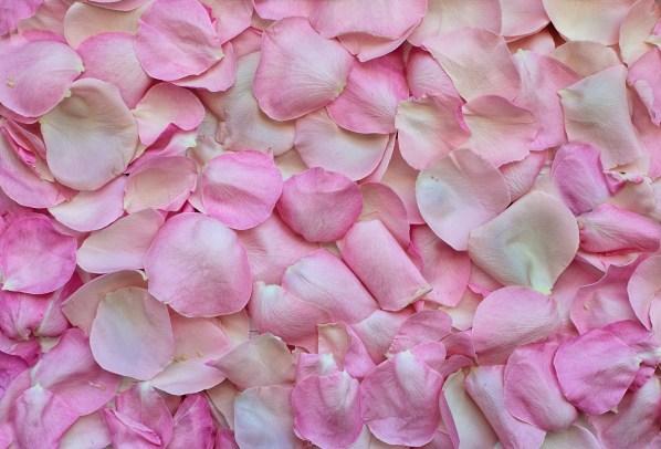 pink rose petals form a blanket cover