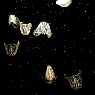 translucent jellyfish bodies float through water, but look as though they're in outer space