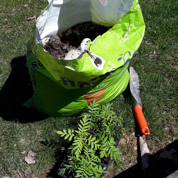 A bag of soil, seedlings, and trowel ready for planting.