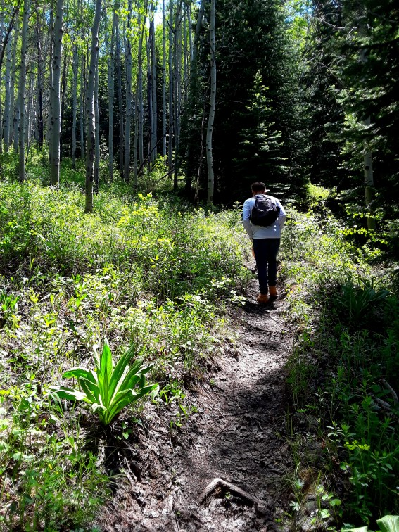Young man with backpack hikes through aspen trees