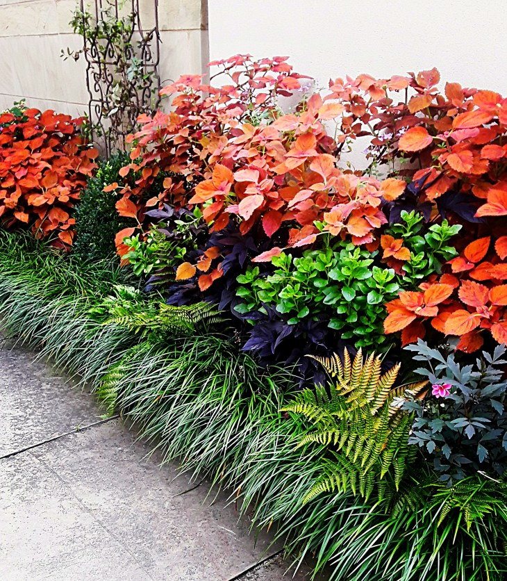 orange coleus, green sedge, purple potato vine, black iron trellis