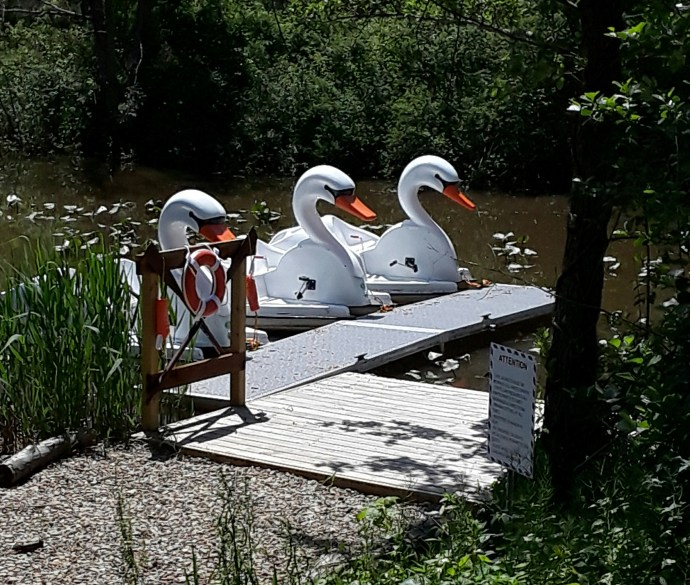 Swan boats lined up on the water.
