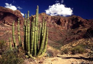The Ajo Mountains with the iconic Organ Pipe Cactus