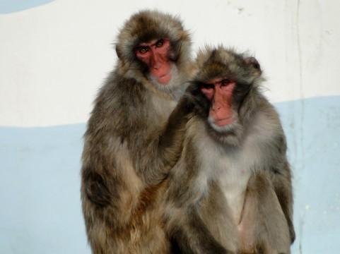 【袖ケ浦な人々】猿が出没