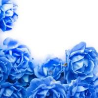 「奇跡のバラ」は日本が! 日本中で楽しめるローズガーデン