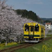 春のいすみ鉄道 新田野~上総東