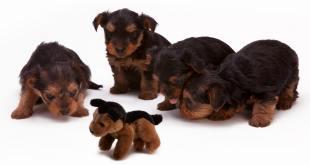 PeTA Explains Animal Rights (Part IV)