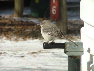 One Cold bird