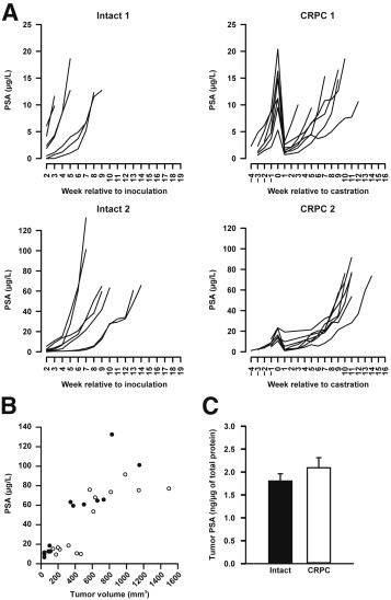 Castration Induces Up-Regulation of Intratumoral Androgen