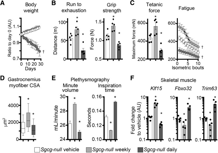 Intermittent Glucocorticoid Dosing Improves Muscle Repair