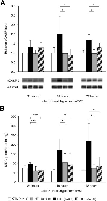 LOX-1 Is a Novel Therapeutic Target in Neonatal Hypoxic