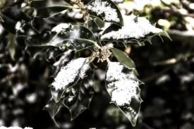 Snow-14-Edit