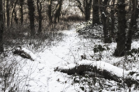 Woodland in the snow