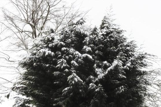 Snow-8-Edit