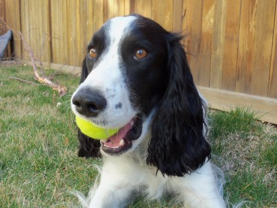 Playing with tennis ball