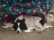 AJ Christmas 2013
