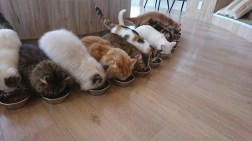 Feeding time at the Cat Cafe.