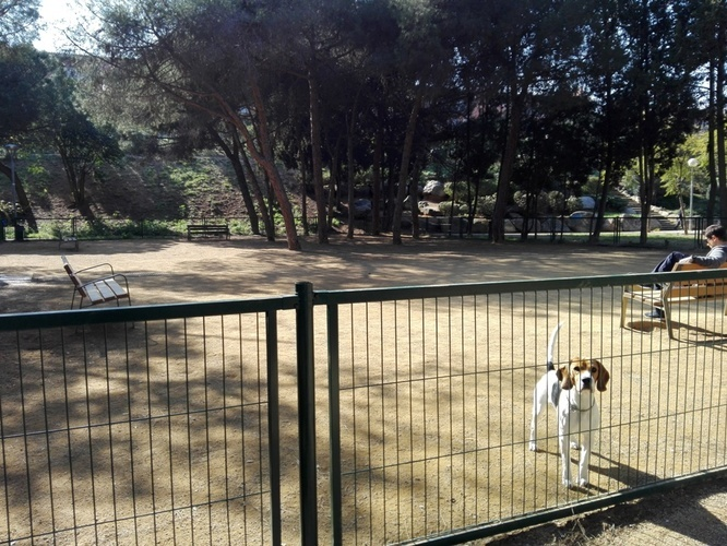 L'Ajuntament de Badalona ofereix suport als propietaris d'animals de companyia durant l'estat d'alarma per la crisi del coronavirus