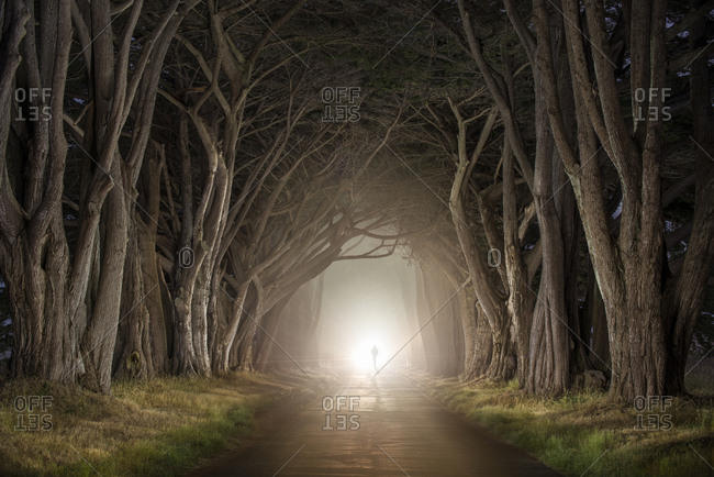 night forest road stock